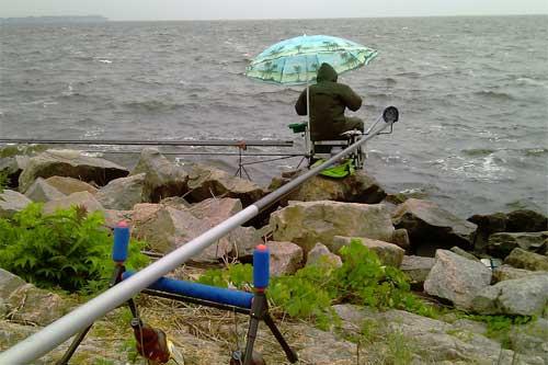 институт защиты растений камень рыболов
