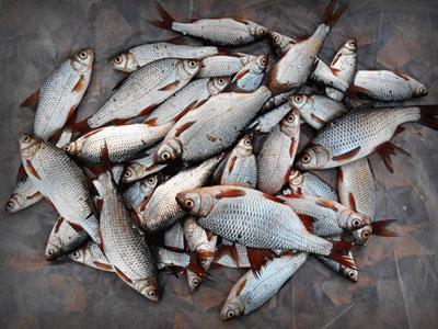 рыбалка на водоемах запорожской области
